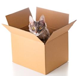 Peti chat dans un carton